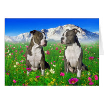 Brindle & Blue Staffordshire & Pit Bull Dogs