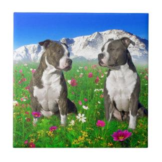 Brindle & Blue Staffordshire & Pit Bull Dogs Ceramic Tile