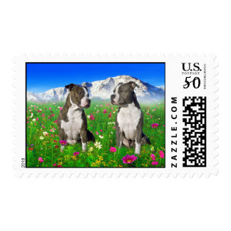 Brindle & Blue Staffordshire & Pit Bull Dogs Postage