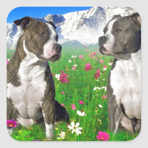 Brindle & Blue Staffordshire & Pit Bull Dogs Stickers