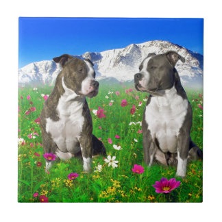 Brindle & Blue Staffordshire & Pit Bull Dogs Tiles