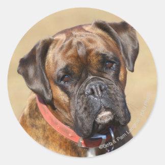Brindle Boxer Dog Classic Round Sticker