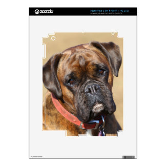 Brindle Boxer Dog Decal For iPad 3