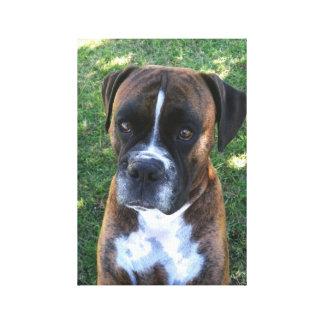 Brindle Boxer Dog Photo Wall Canvas