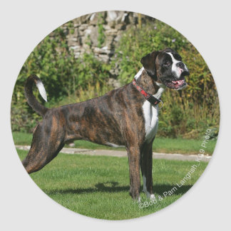 Brindle Boxer Dog Show Stance Classic Round Sticker