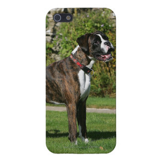 Brindle Boxer Dog Show Stance Cover For iPhone SE/5/5s