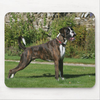 Brindle Boxer Dog Show Stance Mouse Pad