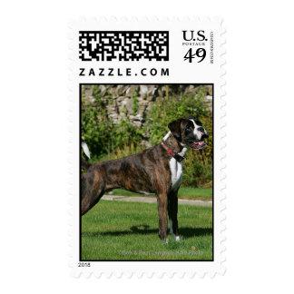 Brindle Boxer Dog Show Stance Postage Stamps