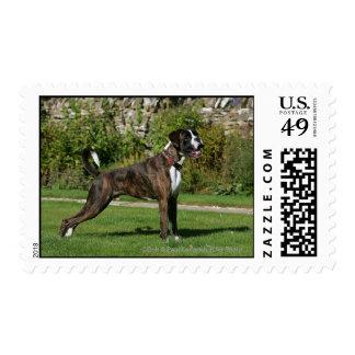 Brindle Boxer Dog Show Stance Stamp
