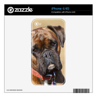 Brindle Boxer Dog Skin For The iPhone 4S