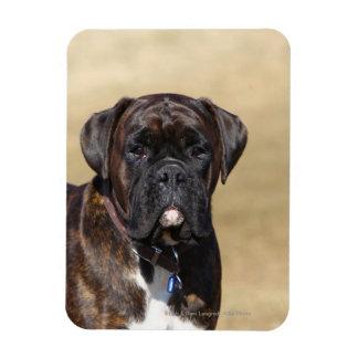 Brindle Boxer Dog Standing Magnet