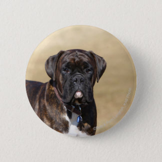Brindle Boxer Dog Standing Pinback Button
