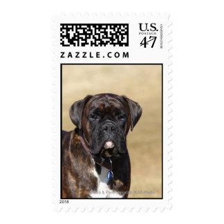 Brindle Boxer Dog Standing Postage