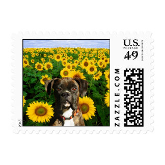 Brindle boxer in Sunflowers Postage