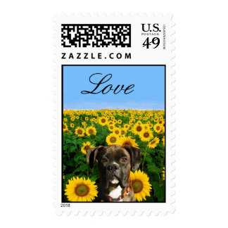 Brindle boxer in Sunflowers Stamp
