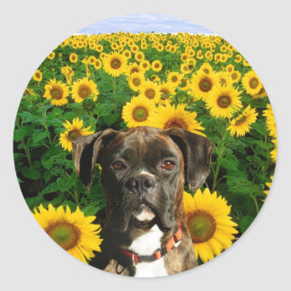 Brindle boxer in Sunflowers stickers