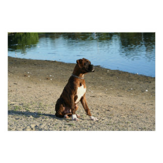 Brindle boxer puppy canvas print