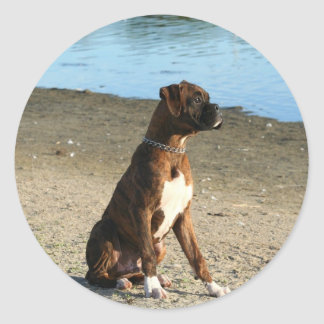 Brindle Boxer Puppy stickers