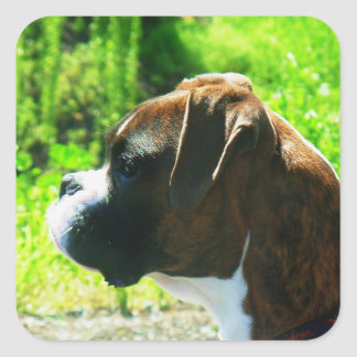 Brindle boxer stickers