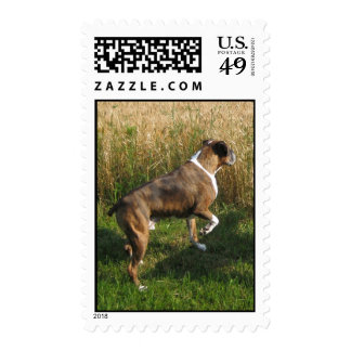 Brindle Boxer Wheat Field Stamp