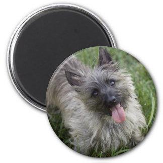 Brindle Cairn Terrier Magnet