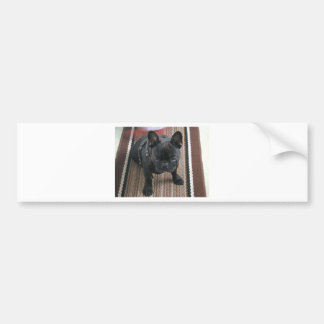 Brindle_French_Bulldog sitting.png Bumper Sticker