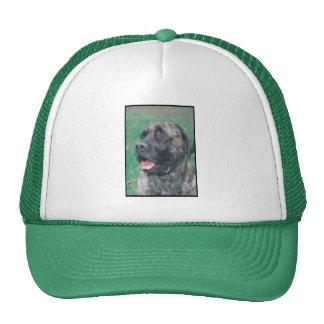 Brindle Mastiff Hat