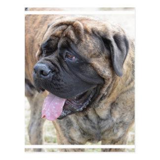 Brindle Mastiff Postcard