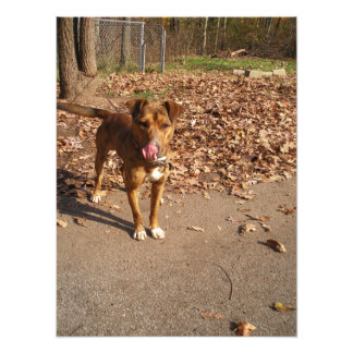 Brindle Mixed Breed Dog Outside in Fall Photo