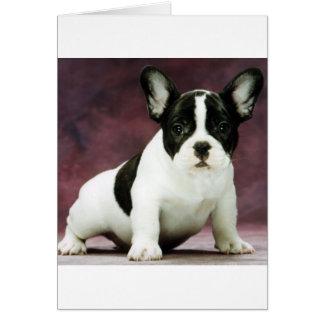 Brindle_pied_french bulldog puppy card