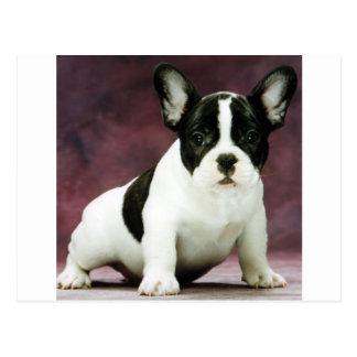 Brindle_pied_french bulldog puppy postcard