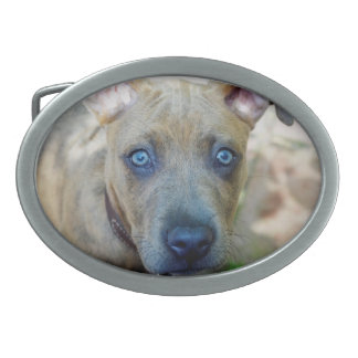 Brindle Pit Bull Puppy by Shirley Taylor Belt Buckle
