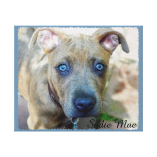 Brindle Pit Bull Puppy by Shirley Taylor Canvas Print