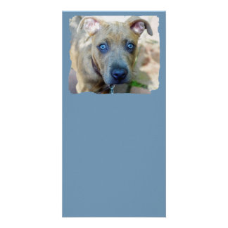 Brindle Pit Bull Puppy by Shirley Taylor Card