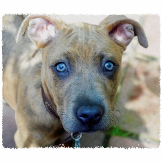 Brindle Pit Bull Puppy by Shirley Taylor Cutout
