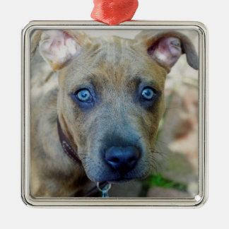 Brindle Pit Bull Puppy by Shirley Taylor Metal Ornament
