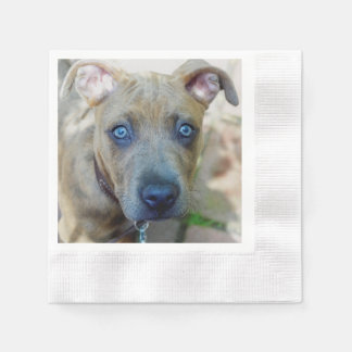 Brindle Pit Bull Puppy by Shirley Taylor Napkin