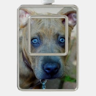 Brindle Pit Bull Puppy by Shirley Taylor Ornament