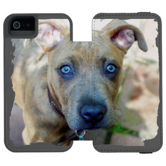 Brindle Pit Bull Puppy by Shirley Taylor Wallet Case For iPhone SE/5/5s