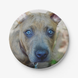 Brindle Pit Bull Puppy 7 Inch Paper Plate