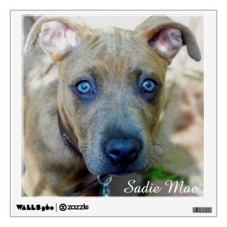 Brindle Pit Bull Puppy Room Graphics