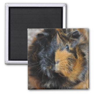 Brindle, Rosette, Guinea Pig Face Magnet