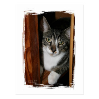 Brindled and white cat framed in wood postcard