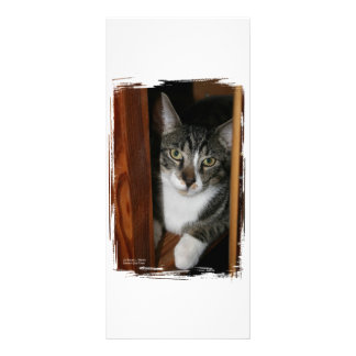 Brindled and white cat framed in wood rack card