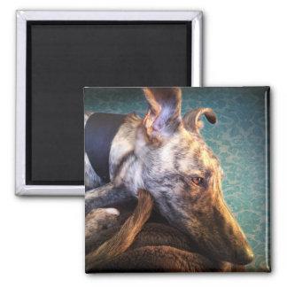 Brindled Lurcher Greyhound 2 Inch Square Magnet