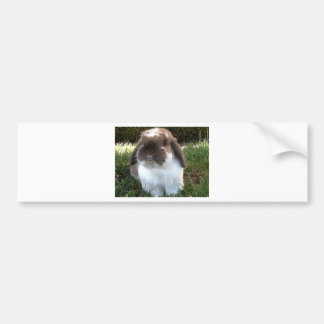 Bring some furriness into your life! bumper sticker