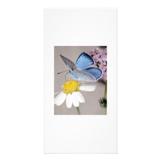 Brisa de verano tarjetas fotográficas personalizadas