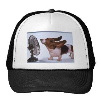 Brisa - perro y fan gorras