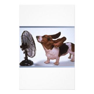Brisa - perro y fan