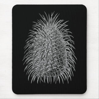 Bristlecone Fir Mouse Pad